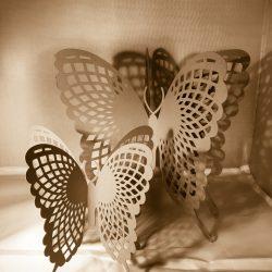 lot de papillons Onnae
